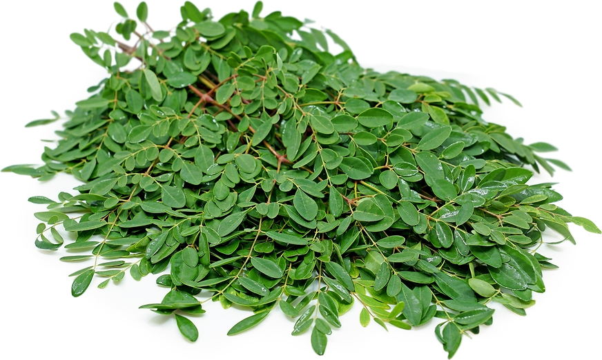 Moringa Leaves Information, Recipes and