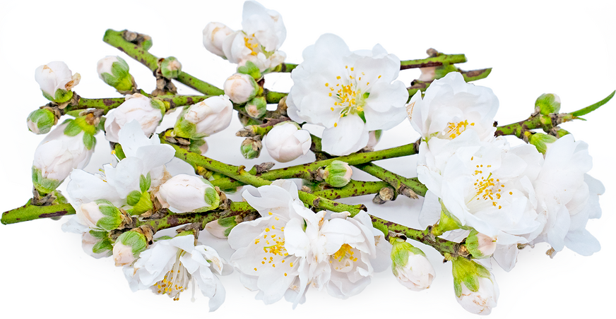 Almond Blossoms picture