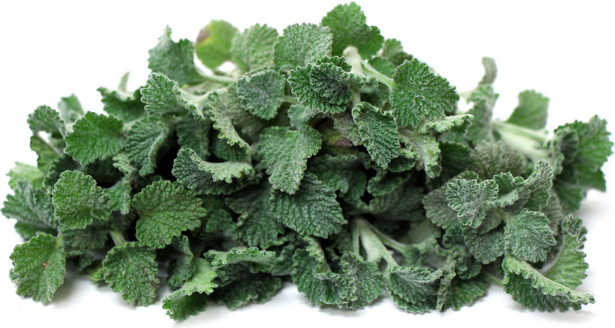 White Horehound picture