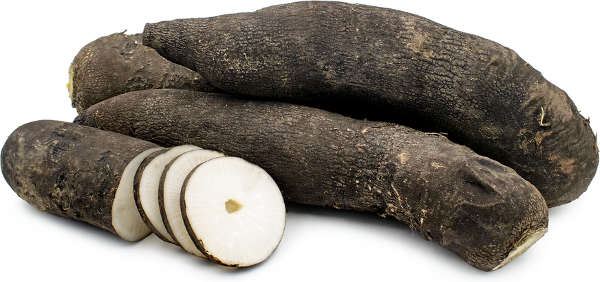 Long Black Spanish Radishes picture