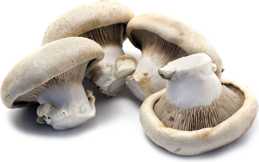Shirakami Awabitake Mushrooms picture