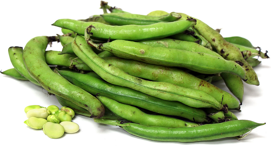 Fava Beans Information And Facts