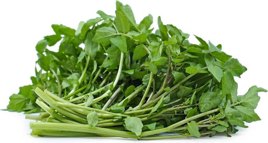 Foraged Wild Watercress picture