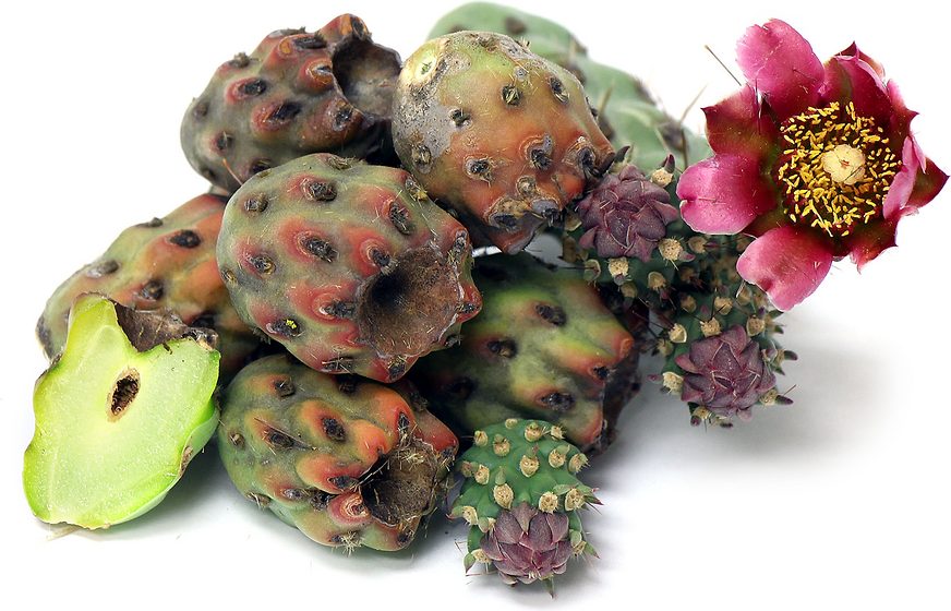 Cholla Cactus Buds picture