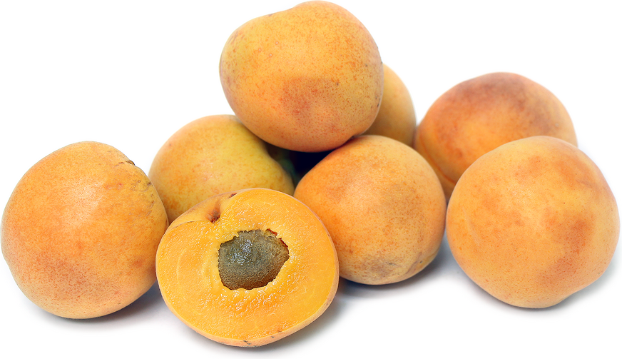 Moorpark Apricots picture