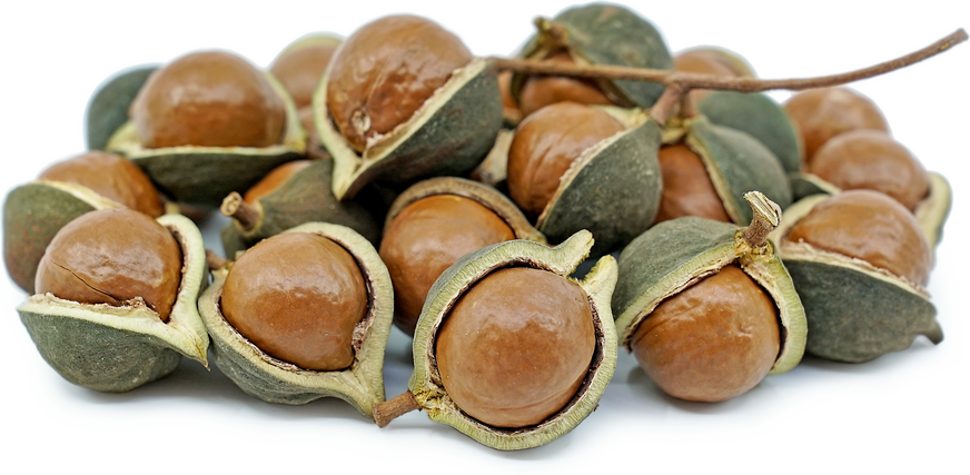 Green Macadamia Nuts Information And Facts