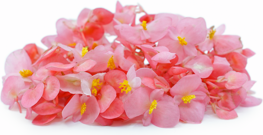 Fresh Flower Begonia (Apple Blossoms) picture