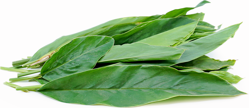 Galangal Leaves picture