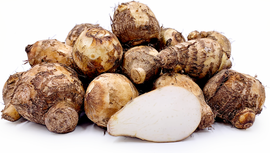 Arvee Roots (corms) picture