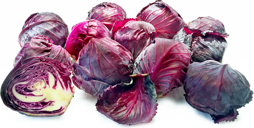 Baby Red Cabbage picture