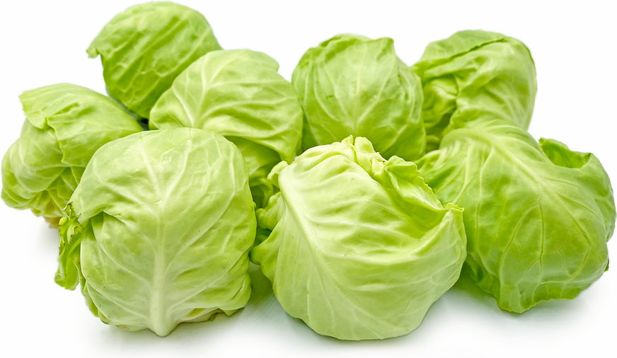 Baby Green Cabbage picture