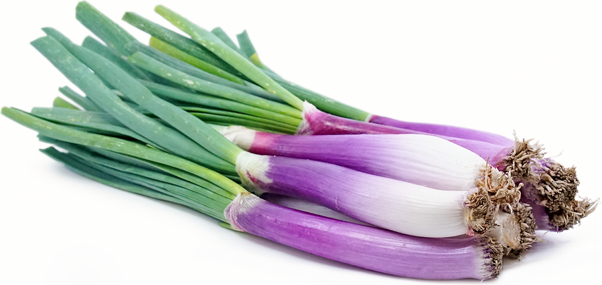 Red Calcot Onions picture