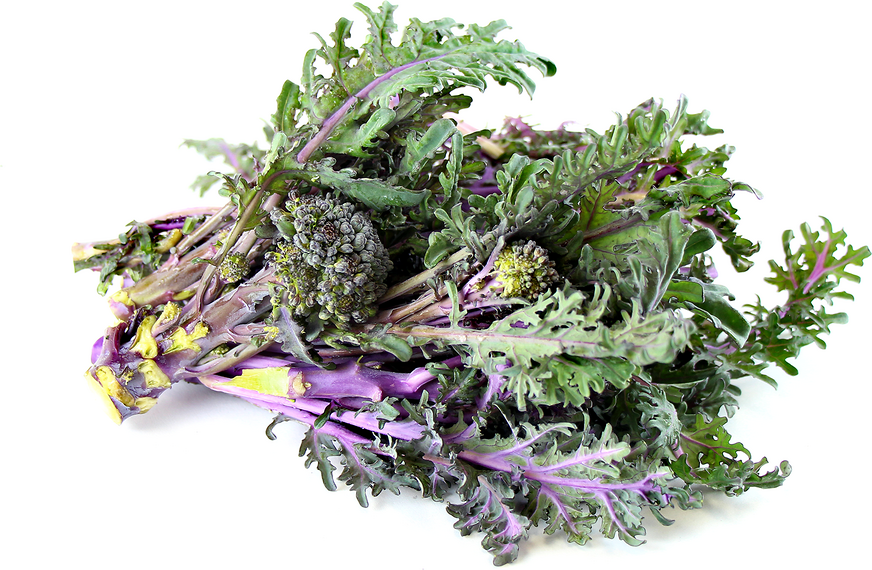 Purple Peacock Broccoli Information And Facts
