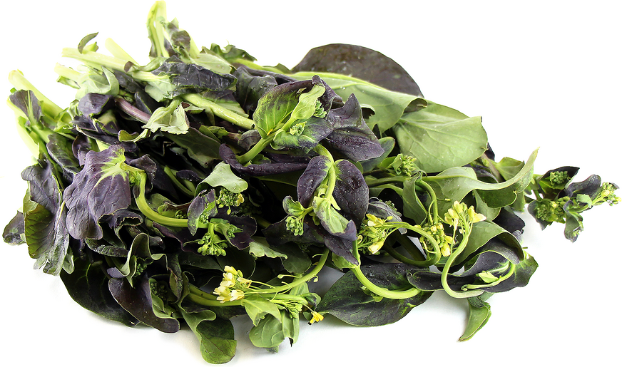 Purple Rapini picture