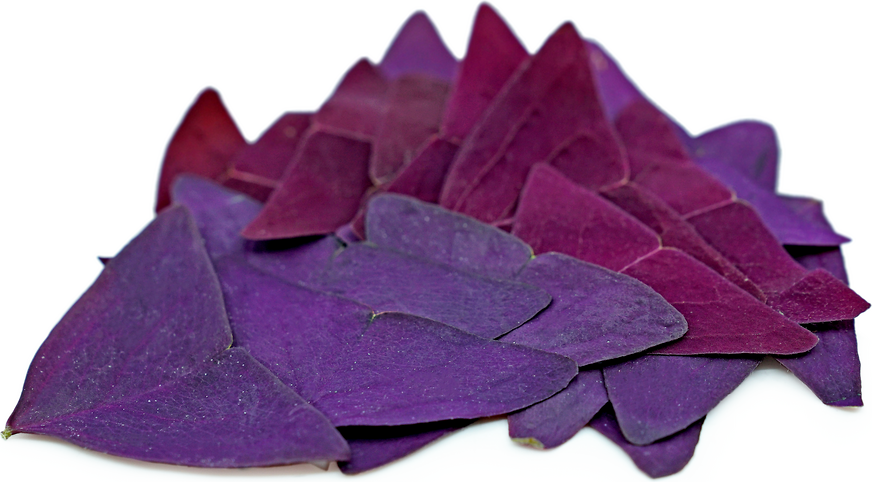 Purple Butterfly Sorrel picture