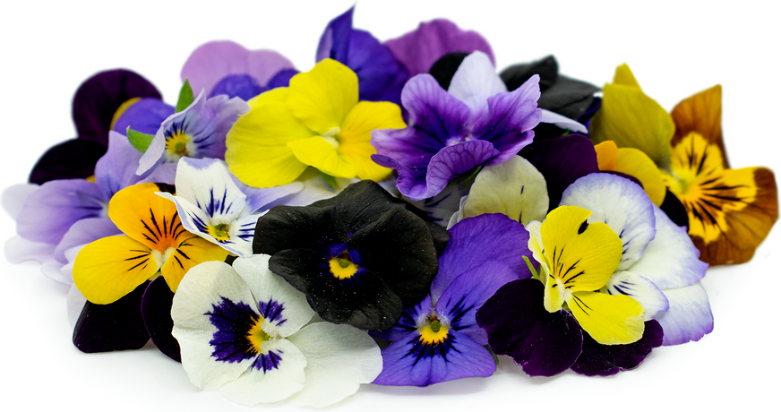 Viola Flowers Information Recipes And Facts