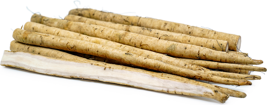 Burdock Root (Gobo) picture