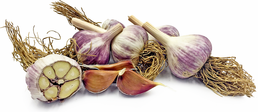 Asian Tempest Garlic picture