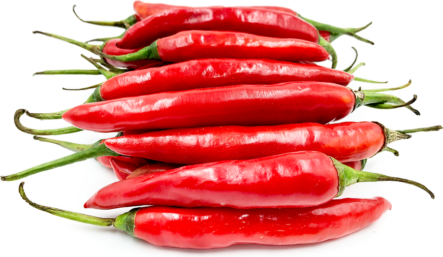 Red Chile Peppers Information And Facts