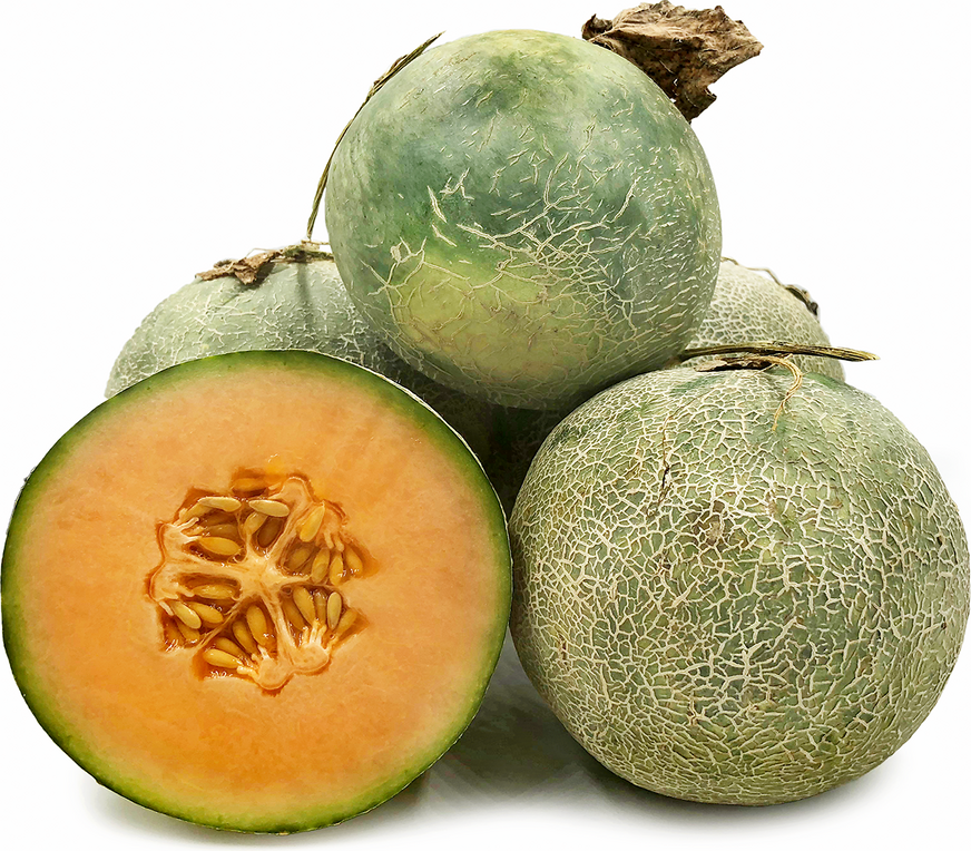 Malaysian Rock Melon Information And Facts Cantaloupe (also cantelope, cantaloup, muskmelon (india and the united states), mushmelon, rockmelon, sweet melon, honeydew, persian melon, or spanspek (south africa)) refers to a variety of. specialty produce