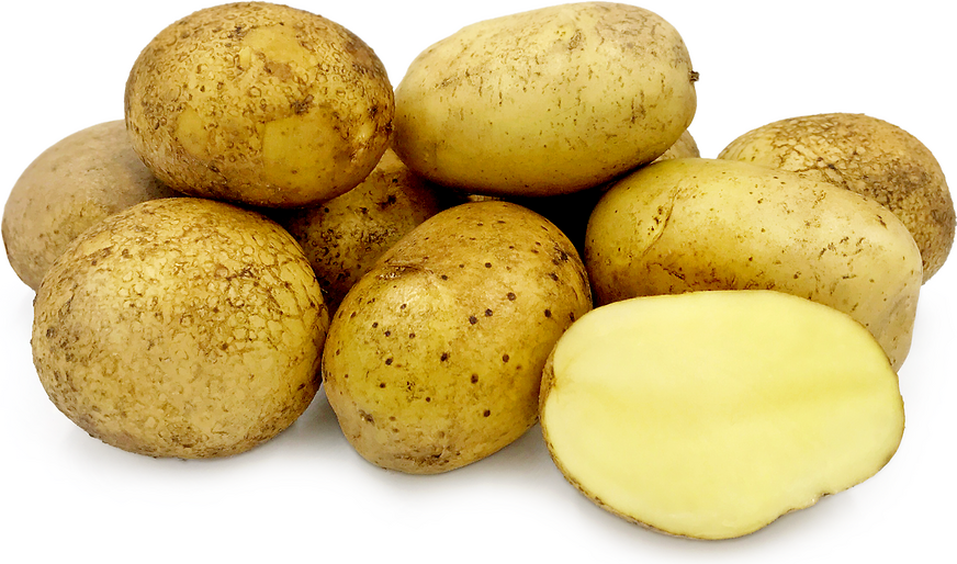 Agria Potatoes picture