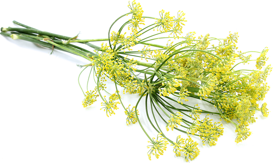 Fennel Flowers picture