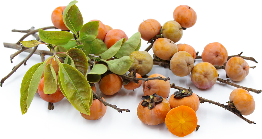 American Persimmons picture
