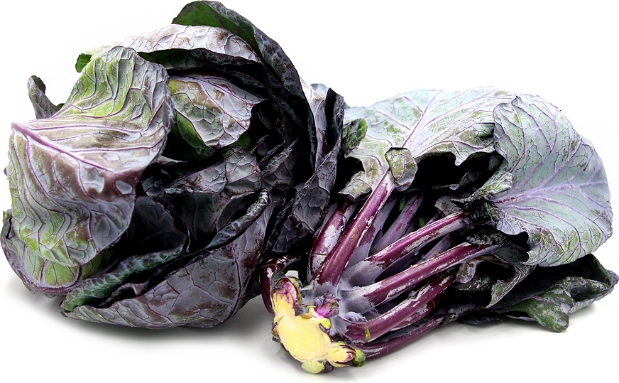 Purple Brussels Sprouts Leaves picture