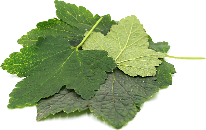Currant Leaves picture