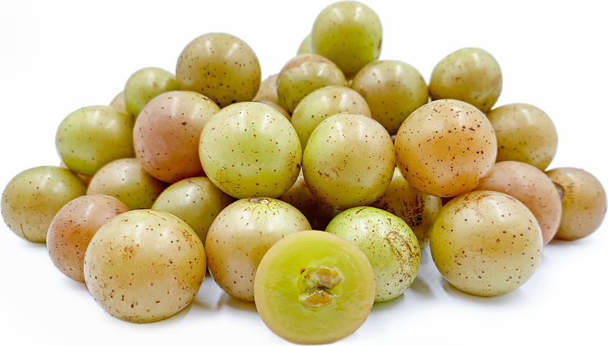 Scuppernong Muscadine Grapes picture
