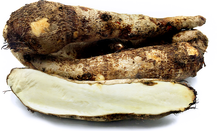 White Yautia Root Information And Facts