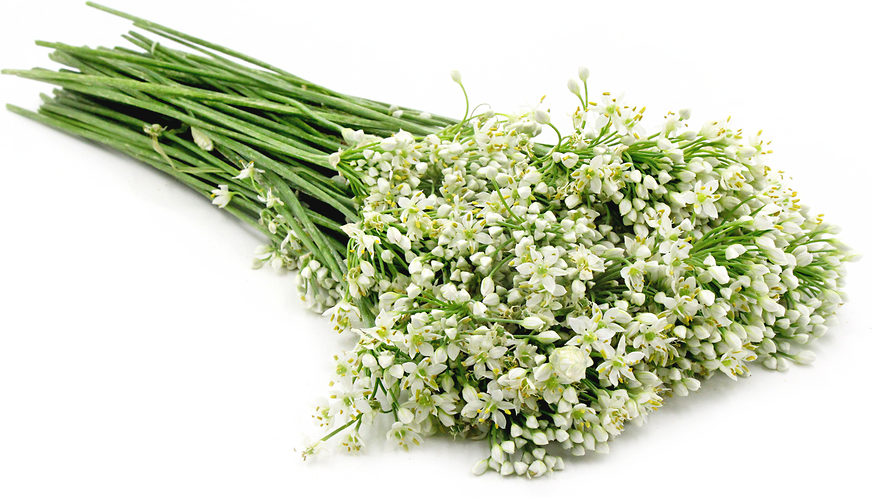 Garlic Chive Blossoms picture