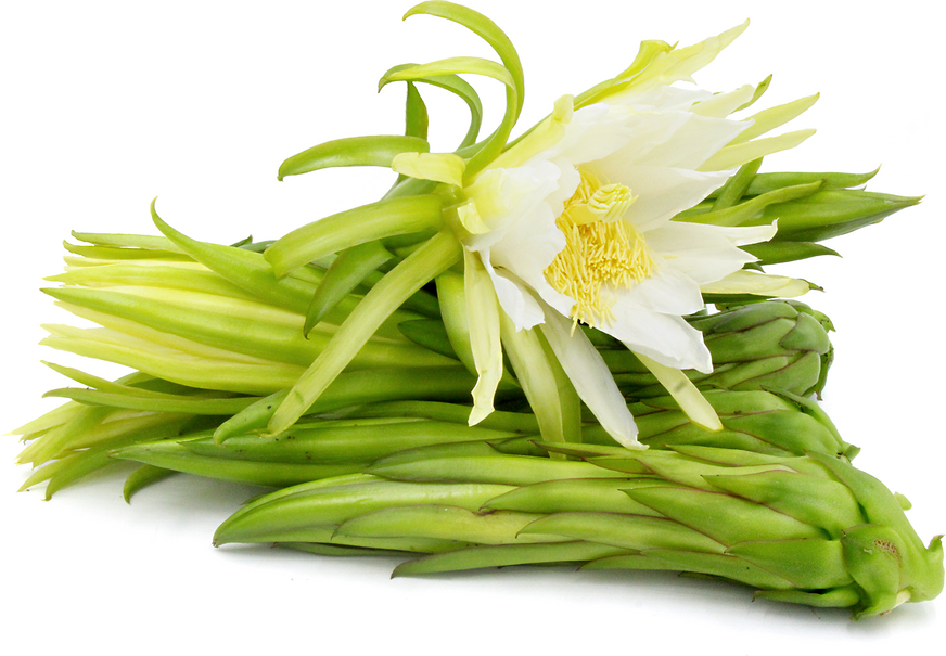 Dragon Fruit Flower Buds picture