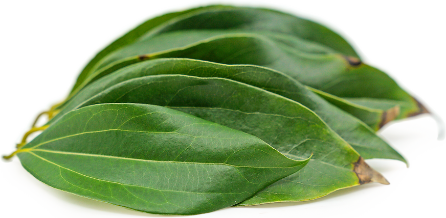 Cinnamon Leaves picture