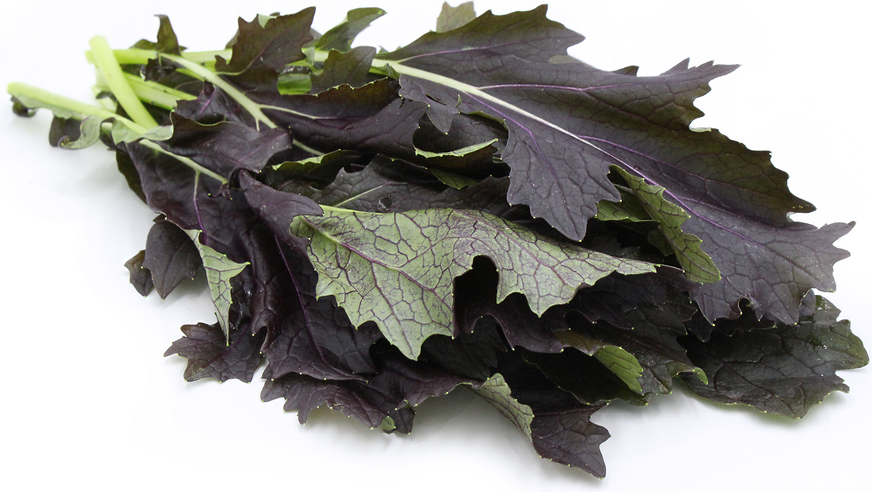 Red Rain Mizuna Mustard Greens picture