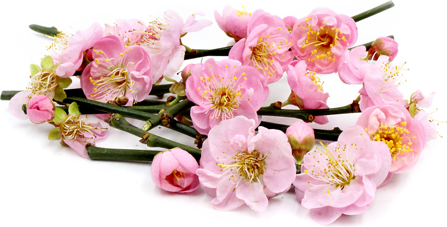 Plum Blossoms picture