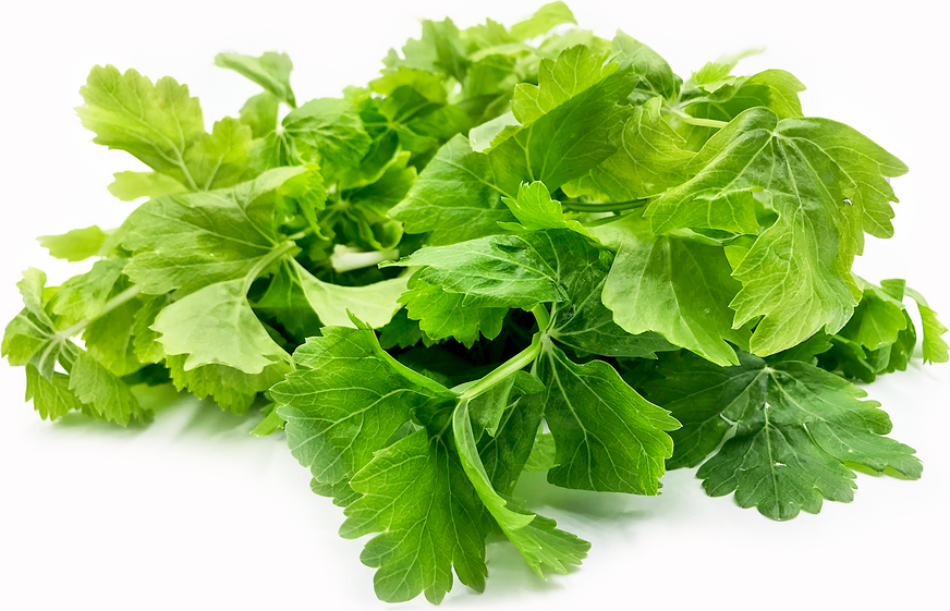 White Celery Leaves picture