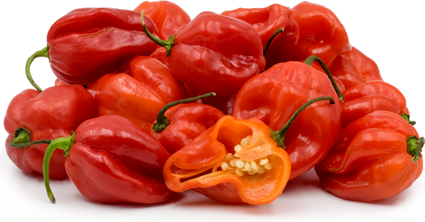 Red Scotch Bonnets Chile Peppers picture