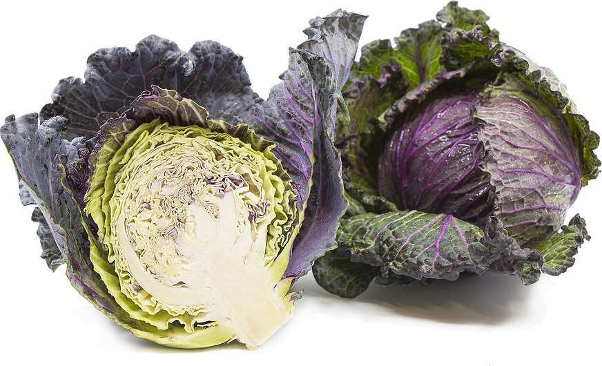 Red Savoy Cabbage Information And Facts