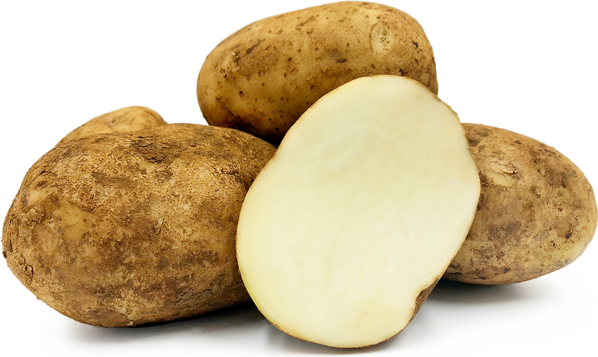 Sebago Potatoes picture