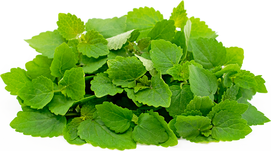 Licorice Mint Information And Facts