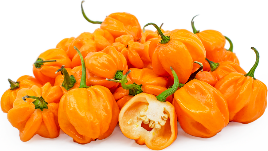 Orange Freeport Scotch Bonnet Chile Peppers picture