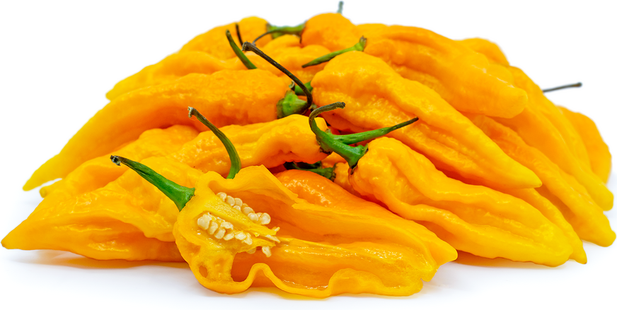 Yellow Ghost Chile Pepper picture