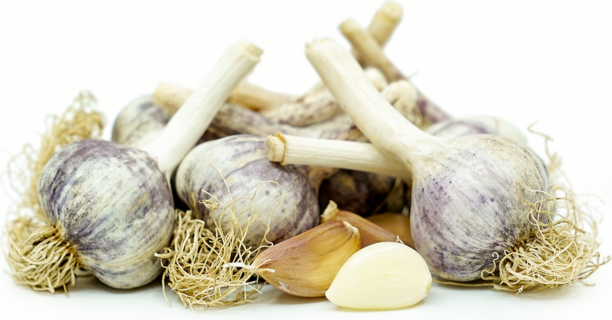 Siberian Garlic picture