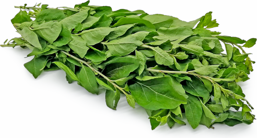 Wolfberry Leaves Information And Facts
