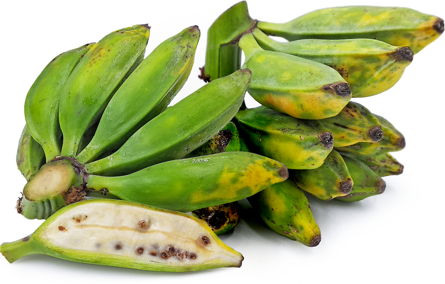 Seeded Bananas Information and Facts