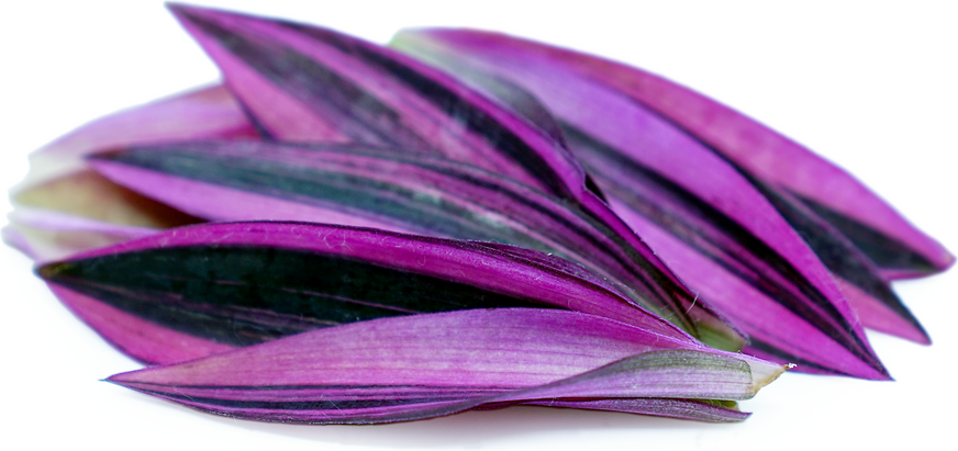 Violet Flash Endive Leaves picture