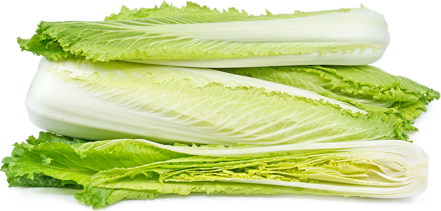 Michihili Napa Cabbage Information And Facts