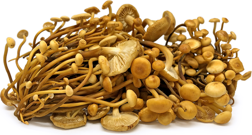 Foraged Golden Enoki Mushrooms picture