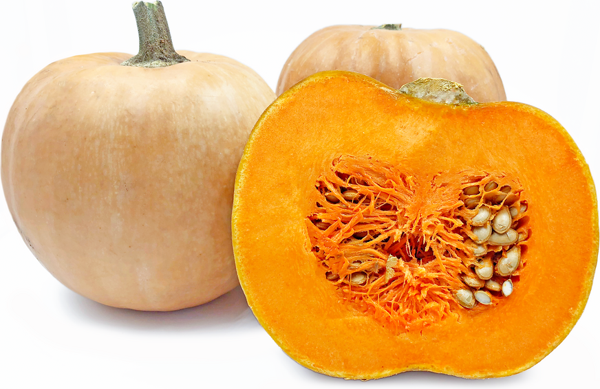 HIGH QUALITY COOKING VARIETY 10 Seeds - EU Certified  Crown Prince Pumpkin